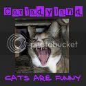 Catladyland