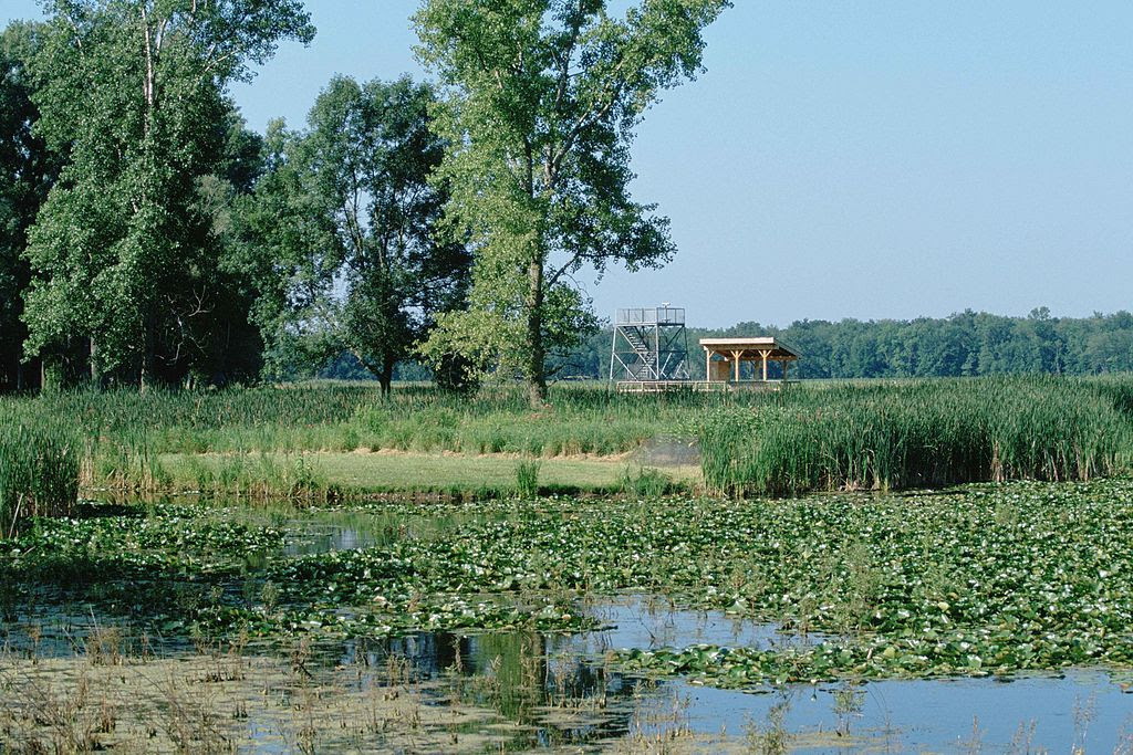 A scenic view of the Montezuma national wildlife refuge.jpg