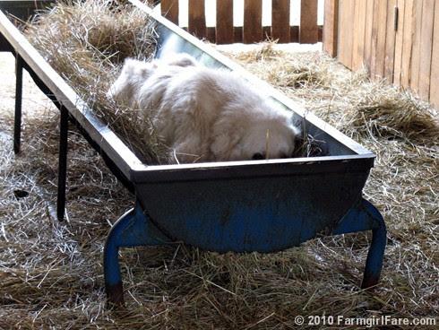 Barn Life 2
