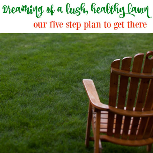 Our Five Step Plan for How to Develop a Healthy Lawn - The Happy Housie