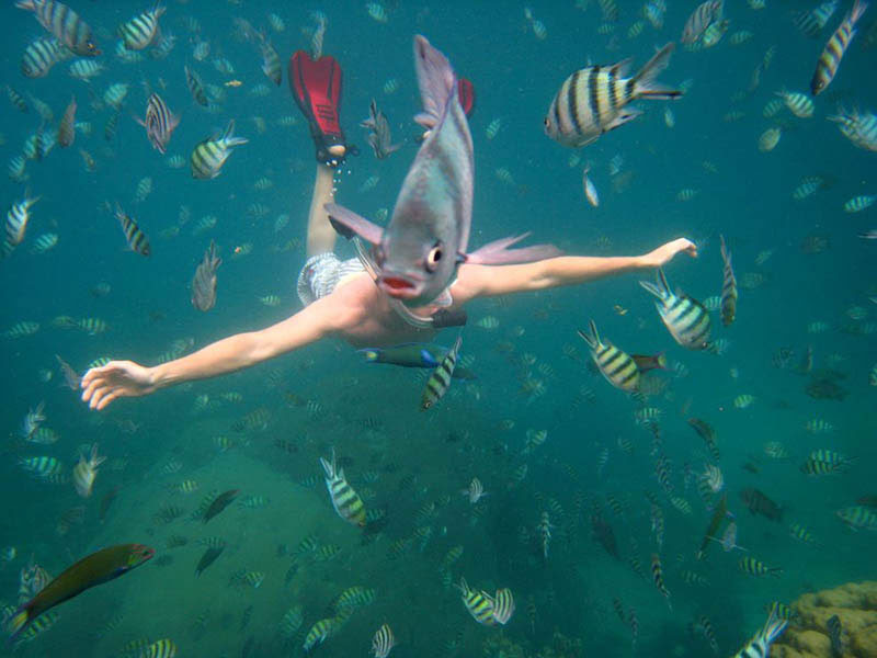 underwater fish photobomb animal photobombs The 50 Most Perfectly Timed Photos Ever
