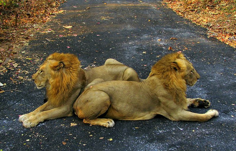 File:India Animals.jpg