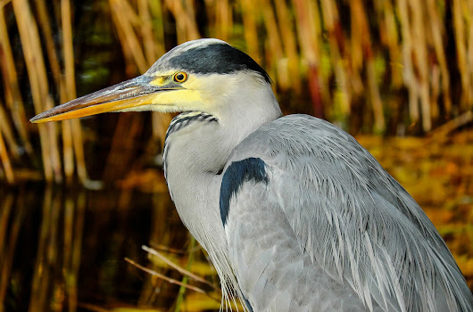 The Eye of the Heron, Creative Exiles, Short Fiction Story