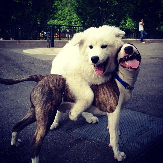 Neville Jacobs Marc Jacobs Dog