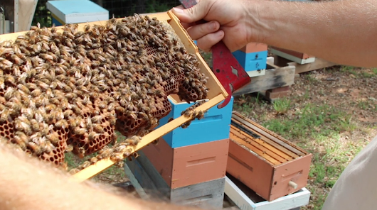 Hive Inspections During Dearth + Video Tutorial