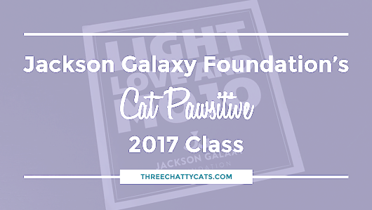 Jackson Galaxy Foundation's Cat Pawsitive 2017 Class | Three Chatty Cats