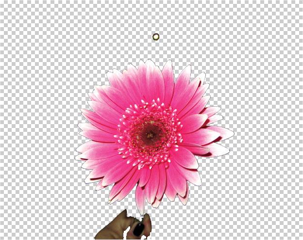 Come Rendere Lo Sfondo Trasparente Con Photoshop