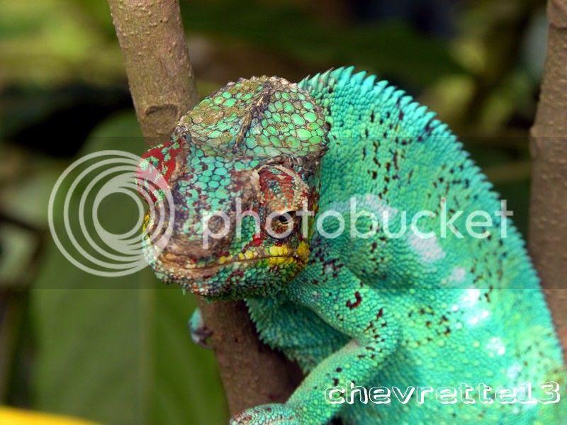 http://i1252.photobucket.com/albums/hh578/chevrette13/Madagascar/DSCN3046Copier_zps0065f282.jpg