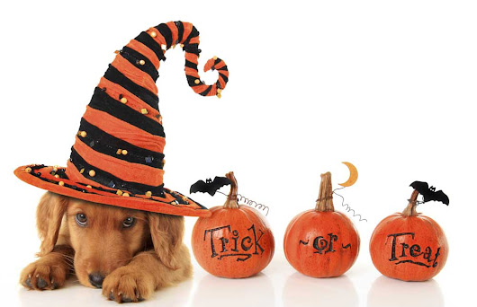 How to Have a Safe Halloween with your Pet | McLean Animal Hospital