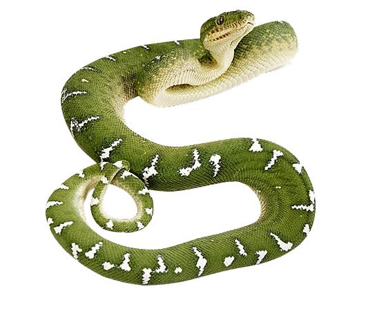 Image: Snake PNG image, free download png picture snakes
