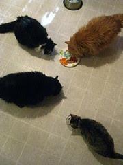 """Cats enjoying cat food birthday """"cake"""""""