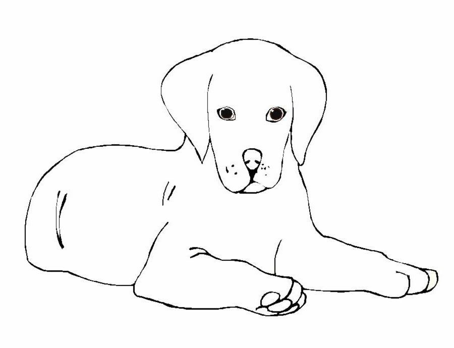 Vedkokeven Blogspot Com Dessin A Imprimer Chien Labrador