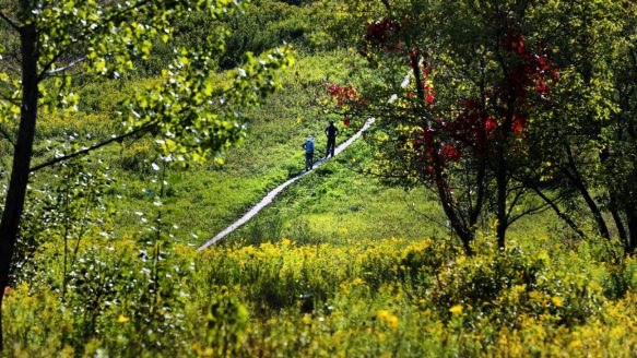 Rouge Park is a truly wild and rural hike and it's accessible by TTC.