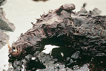 Photo: Dead oiled sea otter after the Exxon Valdez oil spill.