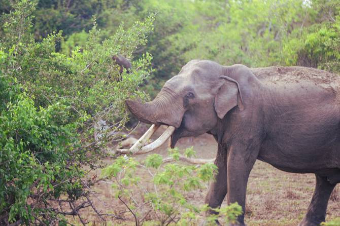 Image result for yala national wild life park