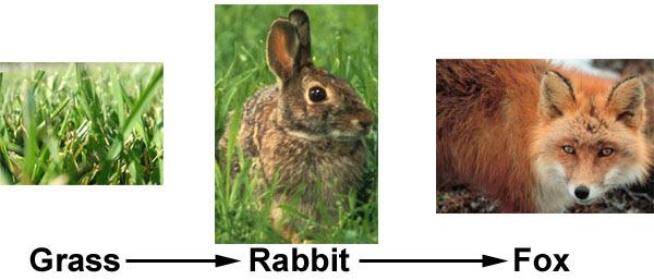 food chain biology