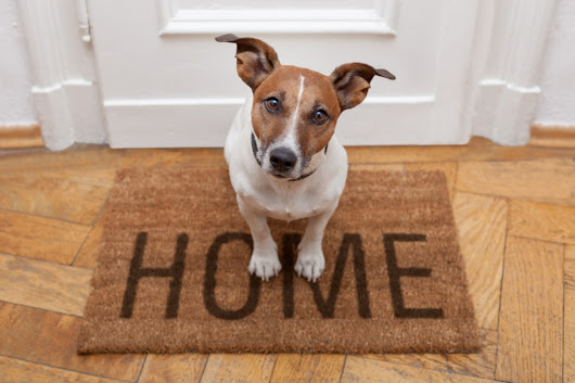 Should You Buy a Jack Russell Terrier?