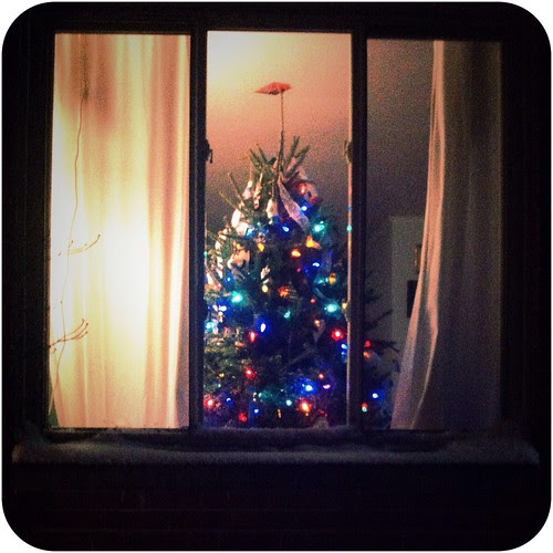 tree in the window