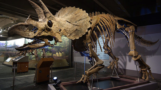 Colossal Fossil: Triceratops Cliff