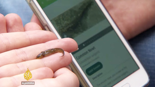 Map of Life: A phone app that helps track wildlife