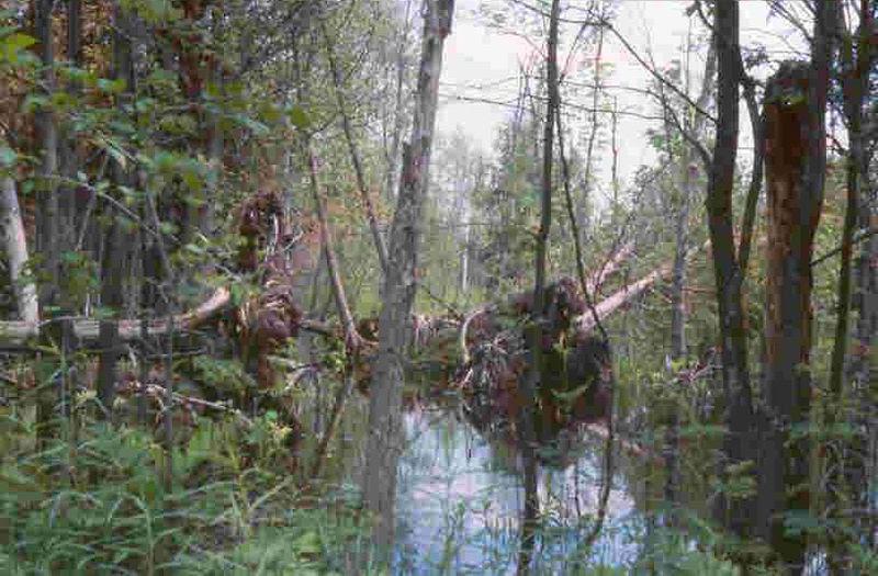 File:Dead Stream Swamp MI.jpg