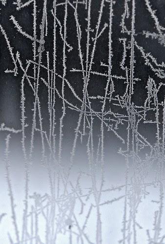 frost-gradient