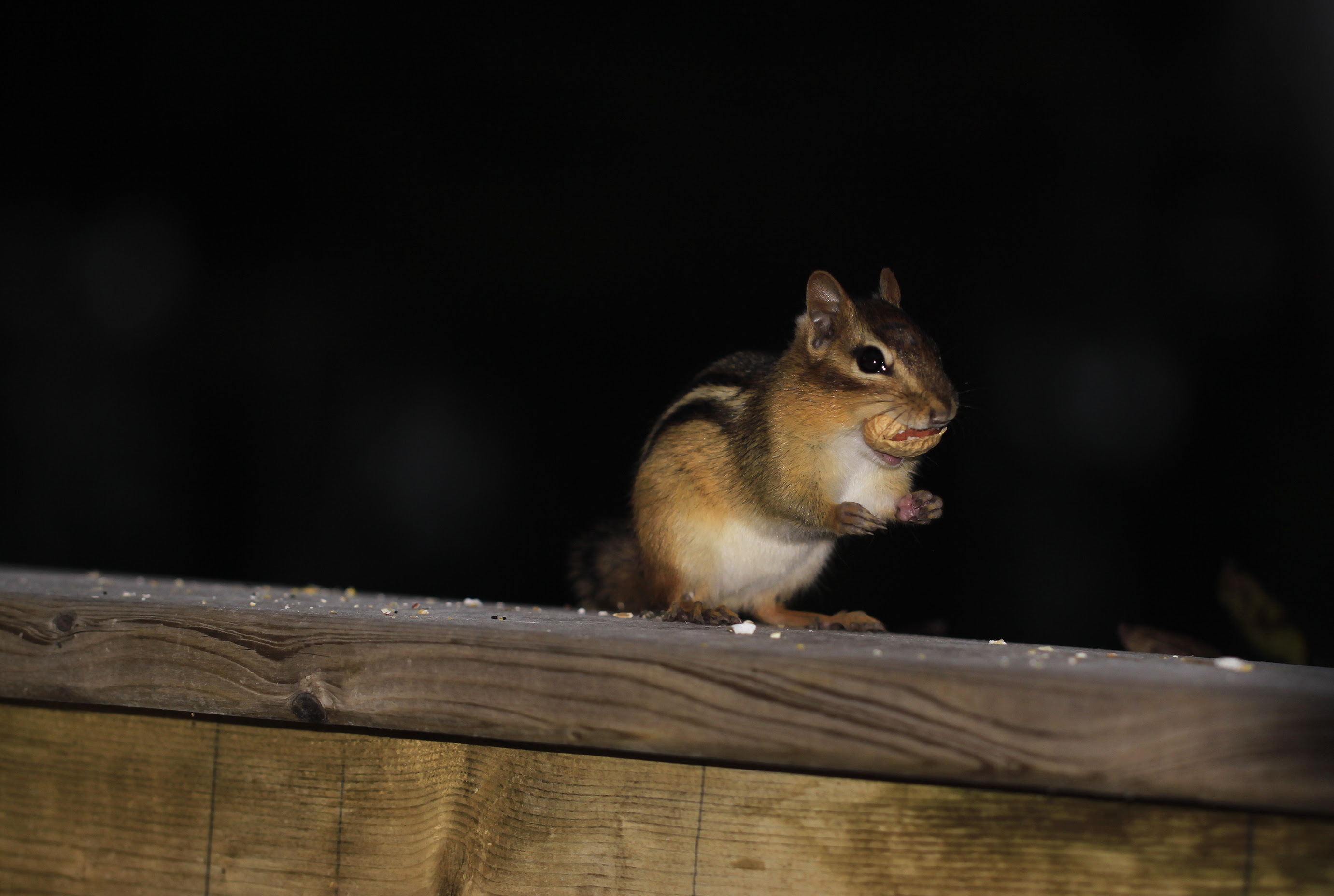 chipper peanut face