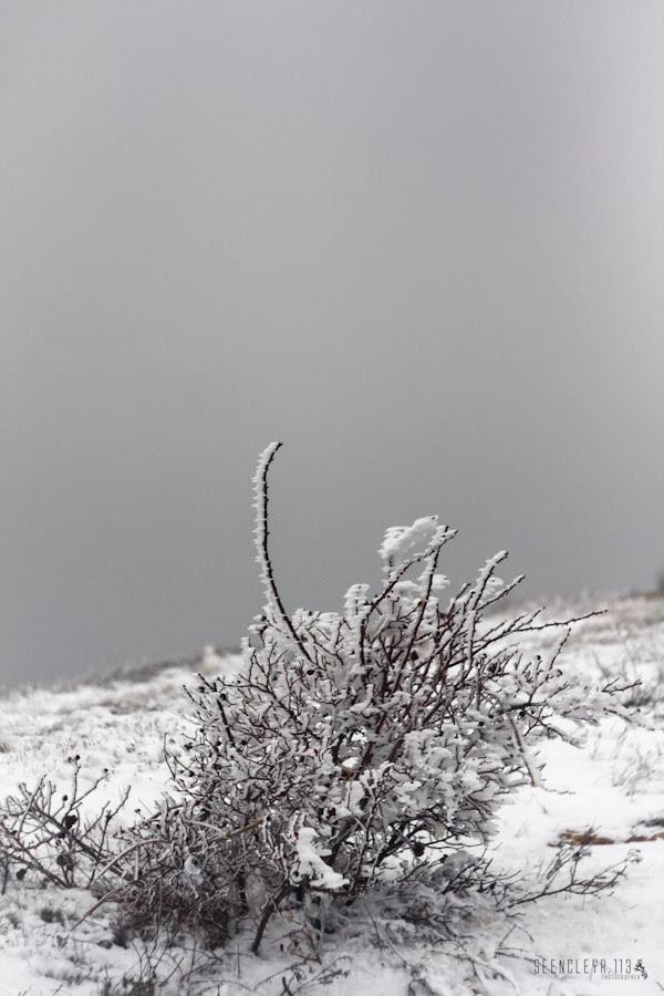 IMG_5860[Замерзші рештки аборигенів]-2