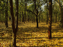 Top 5 Forests In India To Visit For Every Nature Lover - Nativeplanet