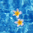 Pool Tips for Weekly Maintenance