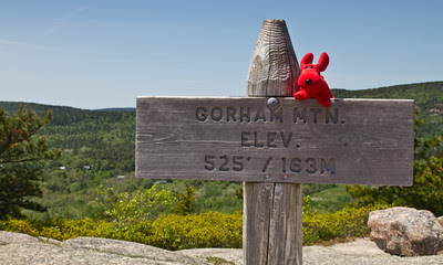 Rover high on Gorham Mountain, Acadia National Park
