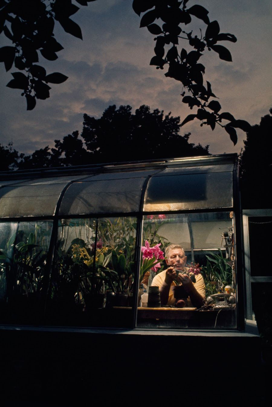 An amateur orchid grower works in the window of his greenhouse in Silver Spring, Maryland, April 1971.Photograph by Gordon Gahan, National Geographic