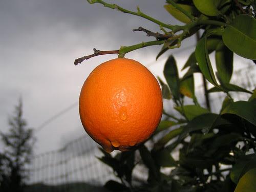 orange and first rain