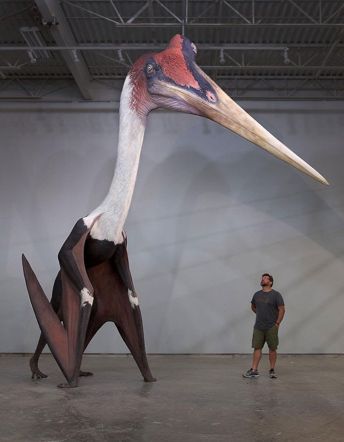 12 - Quetzalcoatlus Northropi Model Next To A 1.8m Man. The Largest Known Flying Animal Ever Exist