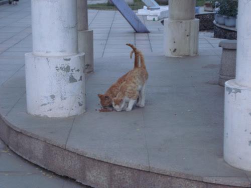 Cats in Shenyang, China _ 0145