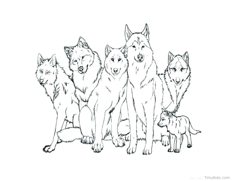 - Coloring And Drawing: Free Wolf Coloring Pages For Adults
