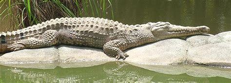 Australia Zoo   Reptiles