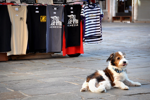 DogSellingTshirts