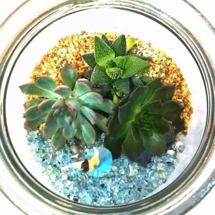 succulent plants for sale