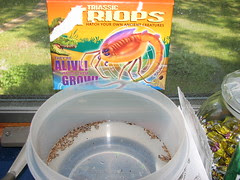 Triops Day 0
