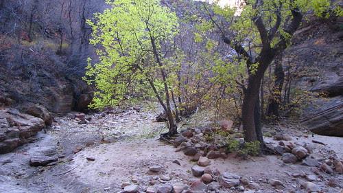 11.22.08 Zion NP Lower Echo Canyon
