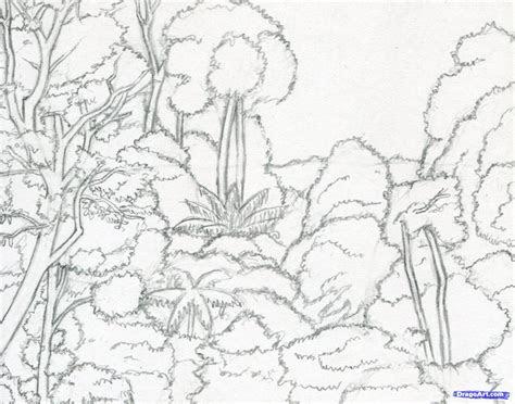 tropical rainforest animals drawing draw  rainforest