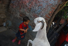 Marziya Shakir and the now dead hand shaking goat of Bandra by firoze shakir photographerno1