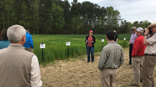 Crop and Soil Sciences Extension in the Field