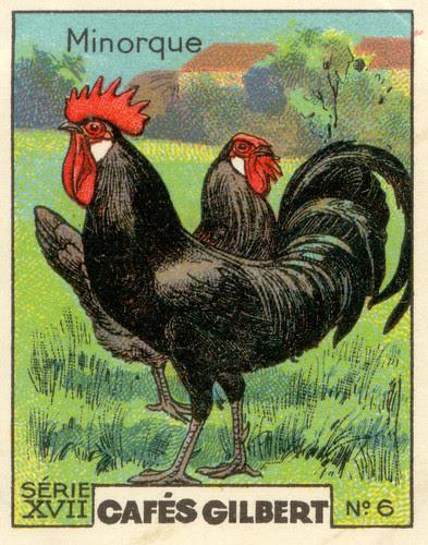 gilbert poules 6