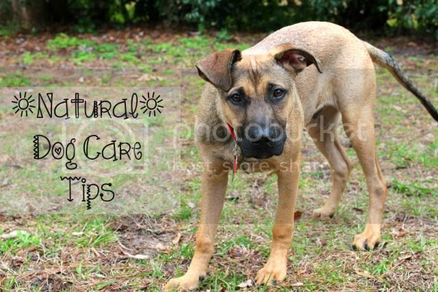 Natural Dog Care Tips