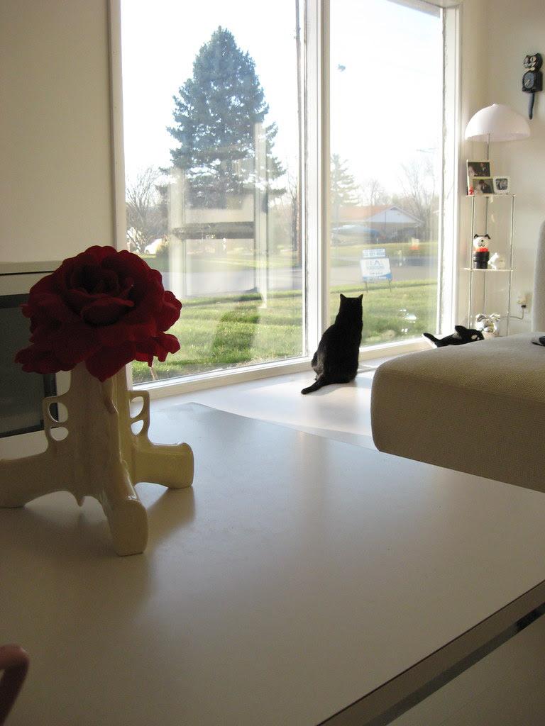 Living Room - Cat in the window