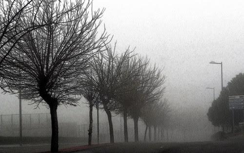 días de niebla