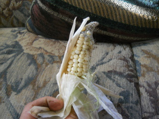 Sweet Corn Ear