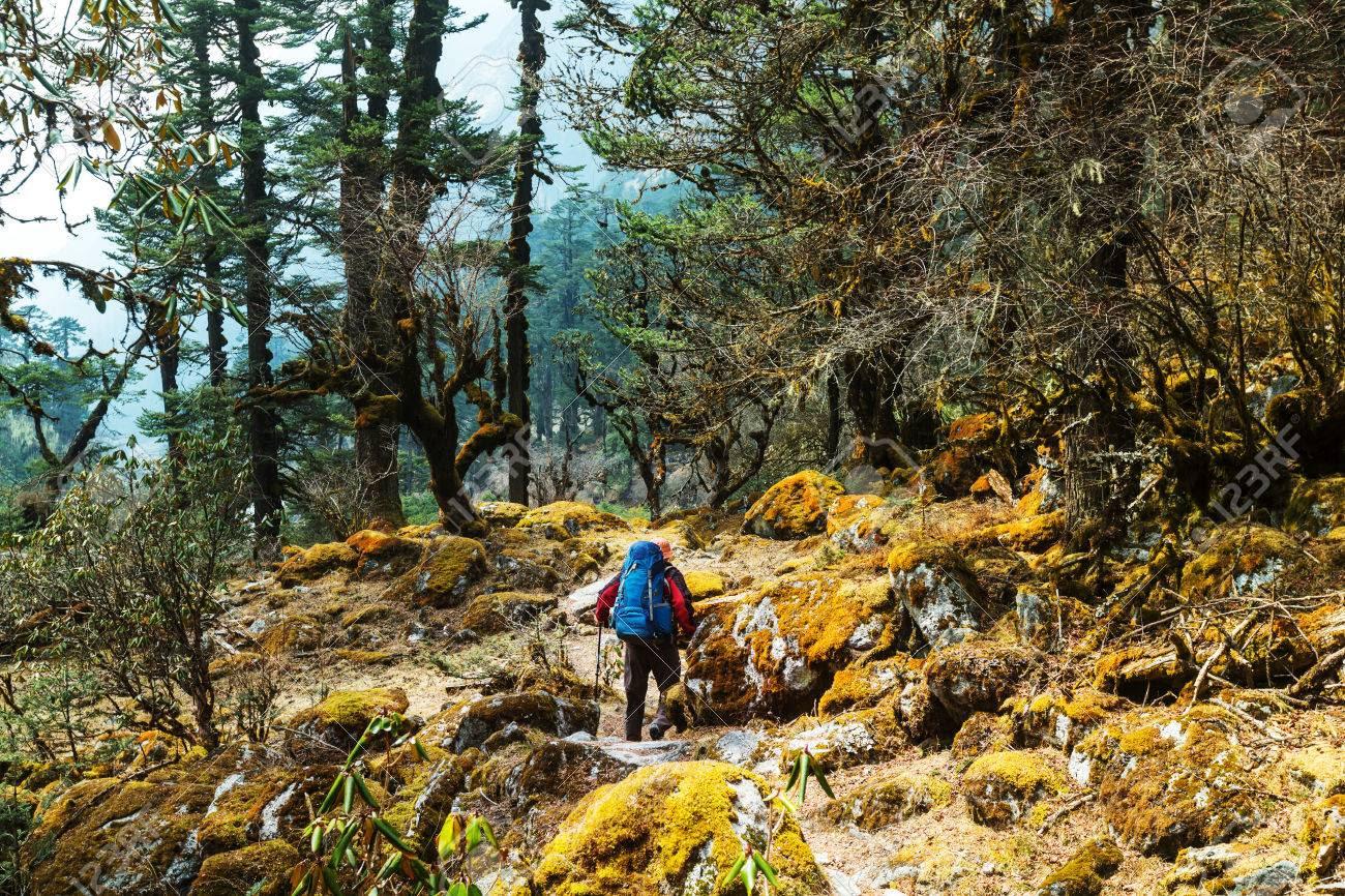 Resultado de imagen de selvas  de nepal